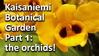 Kaisaniemi Botanical Garden - Part 1: the orchids!!