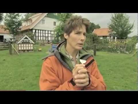 Anne Krger_Border Collie_Spiegel TV