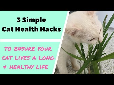 Give your Cat a Healthy life with these 3 easy Tips!