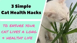 3 Simple Tips for a Happy and Healthy Cat!