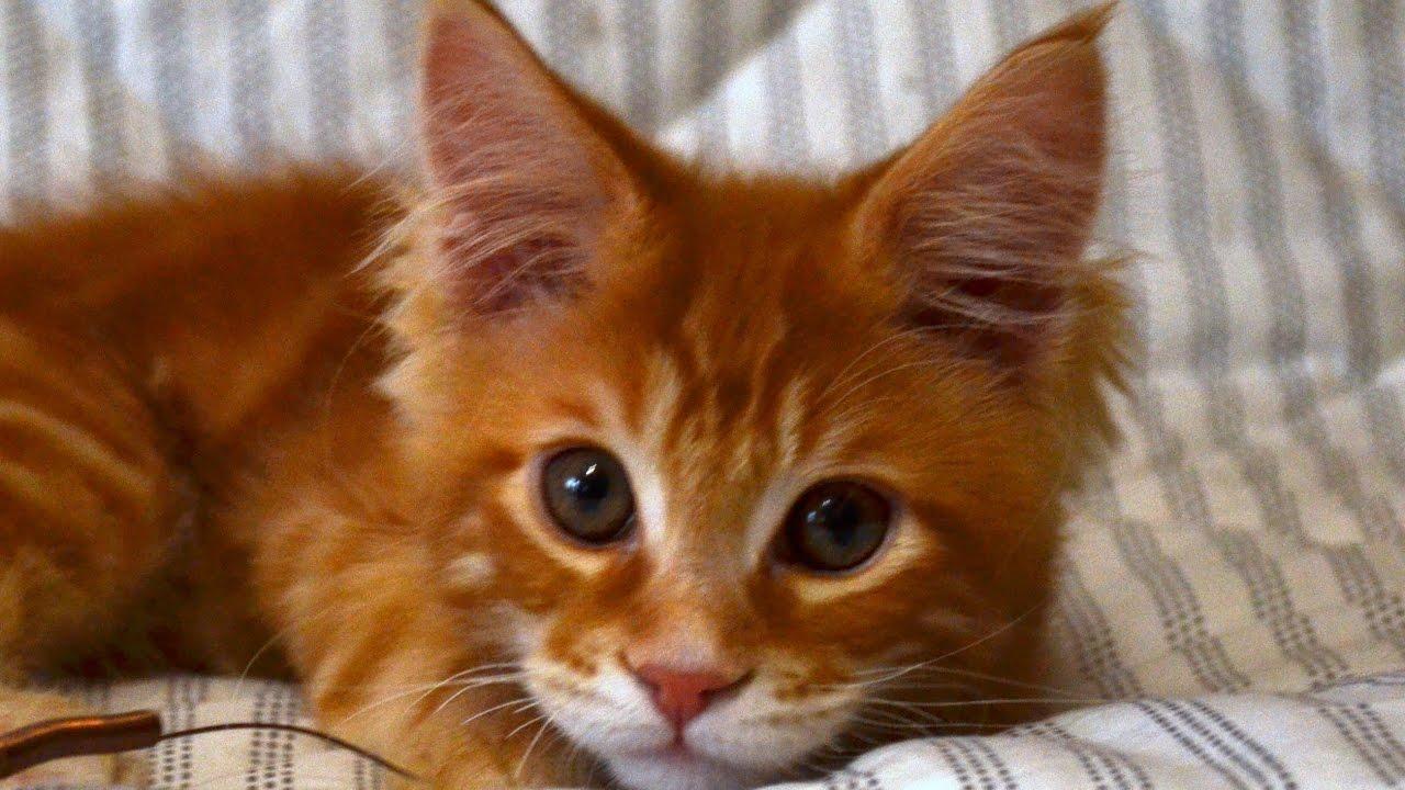 Корм friskies для домашних кошек, изготовленный из курицы и овощей с добавлением витаминов, минеральных веществ и садовой зелени,