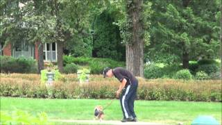 Gracie (beagle) Boot Camp Dog Training Video