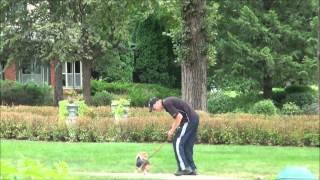 Gracie (beagle) Boot Camp Dog Training Video