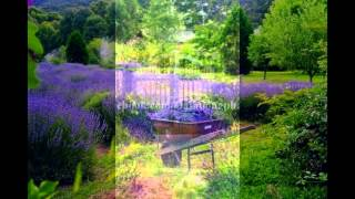 Cánh đồng hoa Lavender***Oaihuongphap*** - những hình ảnh đẹp nhất