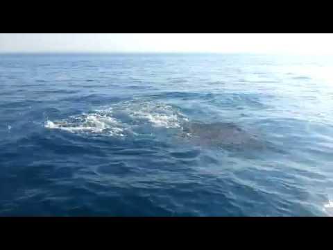 כרישים מול הרצליה