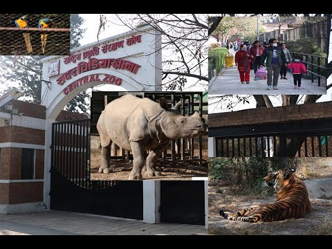Central Zoo of Nepal reopens after eight months