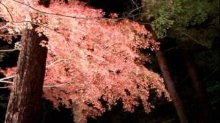 2011年秋 秩父長瀞の紅葉ライトアップを見に出かけた。 今年は、暖かく...