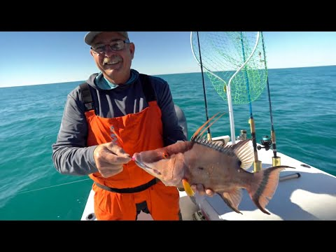 Bacon Quest 2020: Offshore John's Pass Hogfish, Grouper, And Amberjack