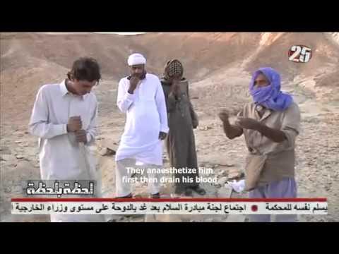 EGYPT ORGAN THEFT FROM ERITREAN REFUGEES