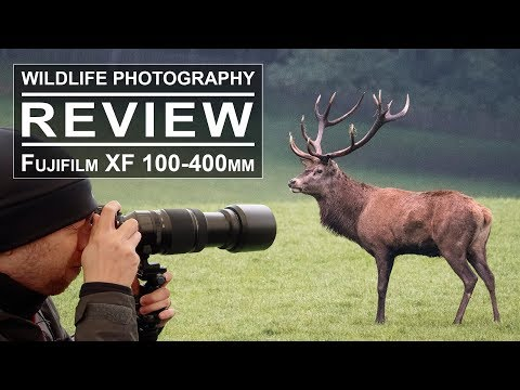 Wildlife Photography With The Fujifilm XF 100-400mm Lens | Review + Test + Sample Pictures