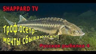 Російська рибалка 4. Російський осетер - троф!!!!