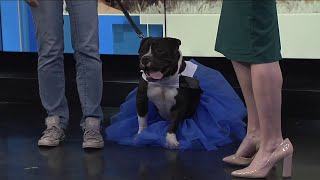 National Dress Your Pet Up Day