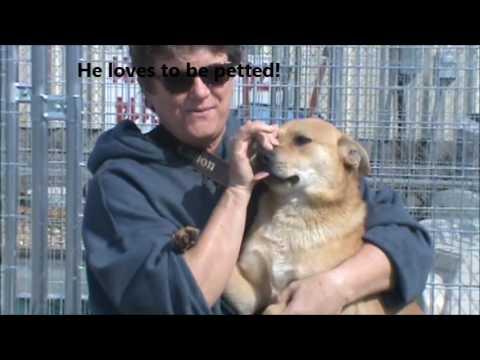 Seminole - Adoptable Spitz/Terrier Mix - Wynne, AR