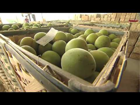 How Monk Fruit Is Grown and Processed