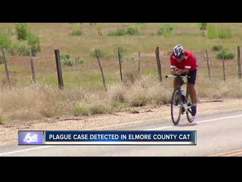 Plague identified in Elmore County cat