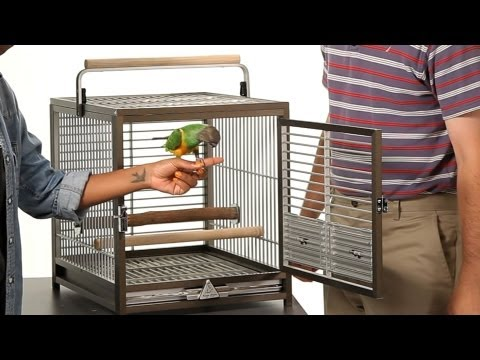 How to Take a Parrot In & Out of Cage | Parrot Training