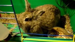 Уход и Содержания кролика!:):):)