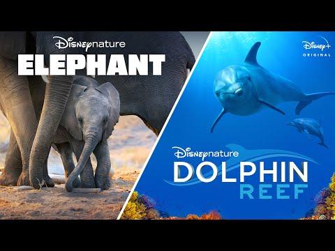 Elephant trailers