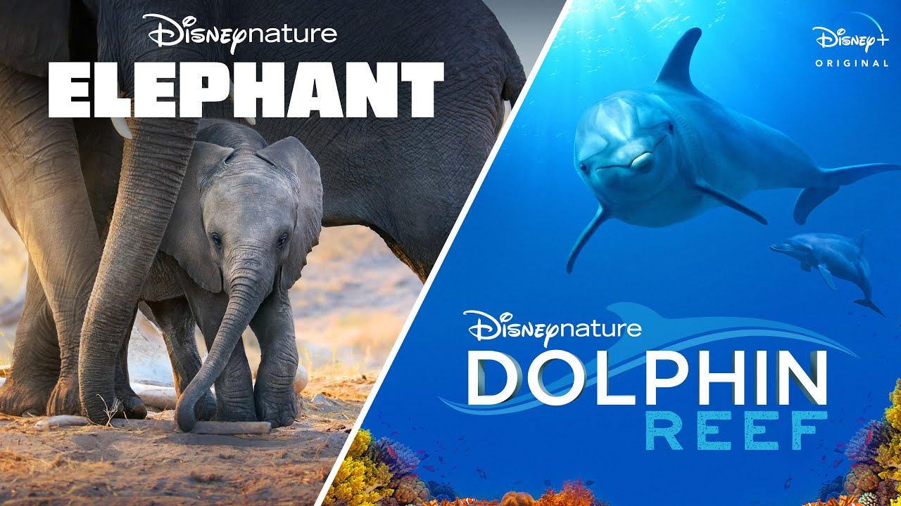 DWE Elephant Fish
