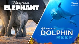 Disneynatures Elephant & Dolphin Reef | Official Trailer | Disney+