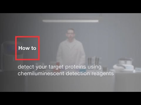 How To Detect Your Target Proteins Using Chemiluminescent Detection Reagents