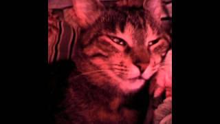 Кошка спит с открытыми глазами)