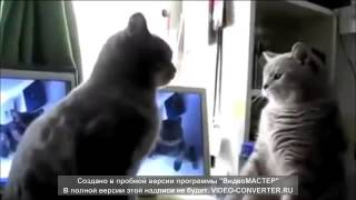 Смешные кошки танцуют   Лучшие видео приколы с кошками Funny Video with kats