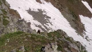 Встретили медведя по пути к озеру Магишо. Закан.