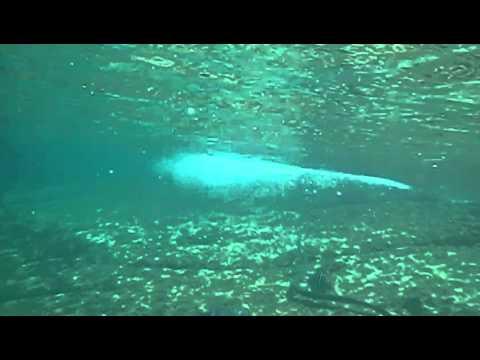 Giftige Schlange Unterwasser In Thailand Similan Islands Youtube