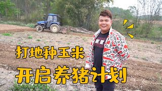 LaoFei hit the ground to grow corn, and also said that he would raise a few sows