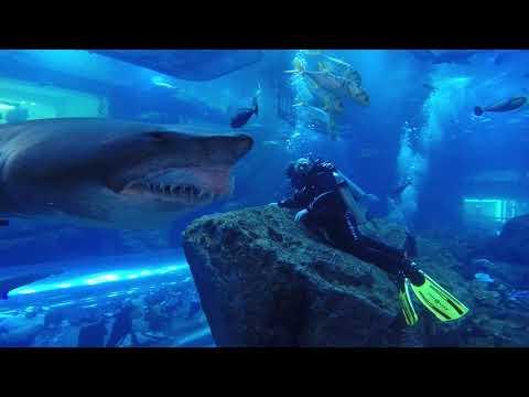Shark Dive Dubai Aquarium – Close Encounter