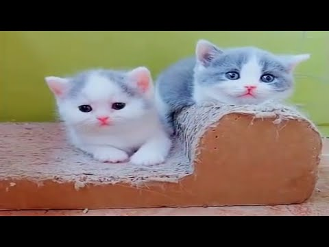 Cute cats and kittens funny videos | cute cats compilation #19