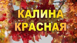 КАЛИНА КРАСНАЯ. Вика Цыганова. Луганск. Новороссия Novorossiya, Lugansk, Donetsk People's Republic