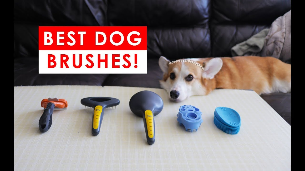 Best Dog Brushes For Shedding And Healthy Fur Hair Youtube