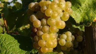 Mosel Wines - Moselweine - Germany: Wines of Moselle Valley - German Riesling Wine