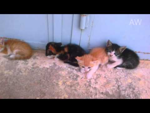 Funny and Angry kittens - say no filming
