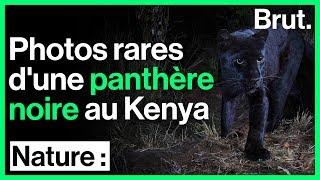Une panthère noire photographiée au Kenya, un évènement rare