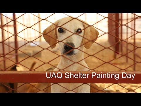 Stray Dogs Center UAQ Painting Day