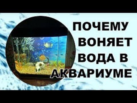 Почему воняет вода в аквариуме! Причины по которым портится аквариумная вода