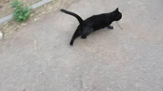 Супер кошка ищет дом