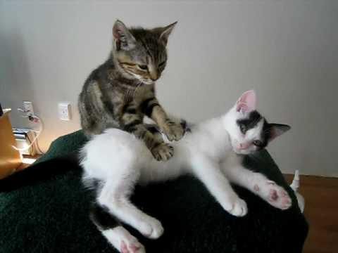AWW ❤️ Cute Kitten Really Enjoys SPA (Pt. 5) ❤️ Cat Massage ASMR