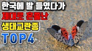 한국에 발 들였다가 제대로 혼쭐난 생태교란종 TOP4