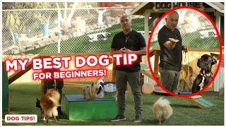 My BEST DOG TIP for Beginners! (Cesar Millan Dog Tips!)