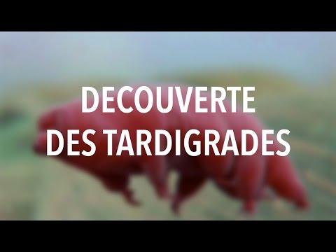 DECOUVERTE DES TARDIGRADES - Les micro-expériences #03