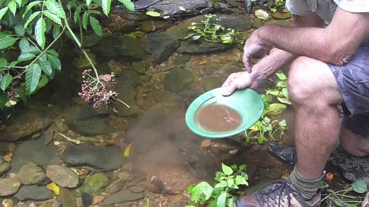 Gold Prospecting a Rainforest Stream