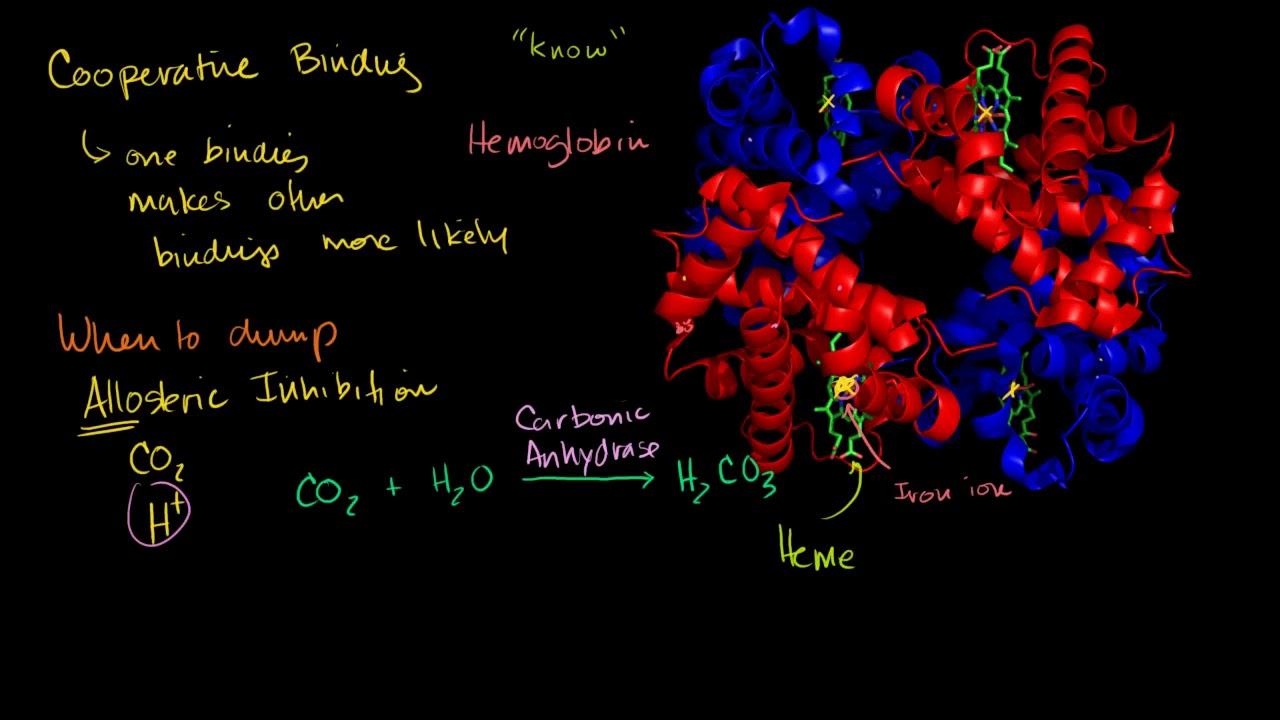 Hemoglobin Human anatomy and physiology Health & Medicine Khan Academy  YouTube