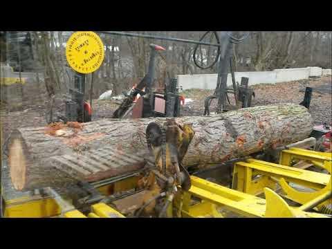 sawing pine