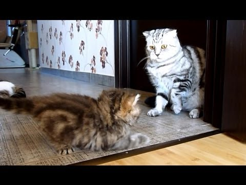 Interrupted dance . Funny Cats and Cute Kitten