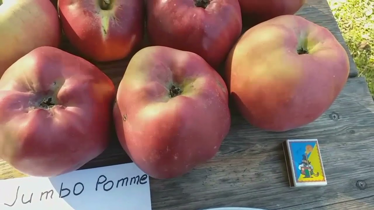 История о двух Великанах. Яблони сорта Секаи Ши (apple Sekai Ichi) и Джумбо Помм (apple Jumbo Pomme)