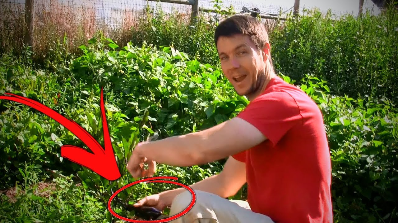 What Happens When You Urinate On Your Garden Youtube